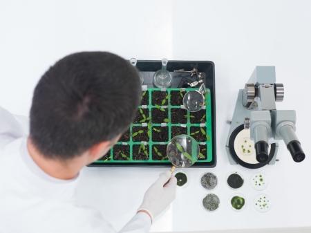 genetica: Alto angolo sopra la spalla vista di un tecnico di laboratorio maschio o scienziato controllando piantine in un vassoio durante gli esperimenti di ingegneria genetica
