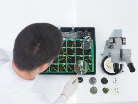High angle over the shoulder view of a male laboratory technician or scientist checking seedlings in a tray during genetic engineering experiments