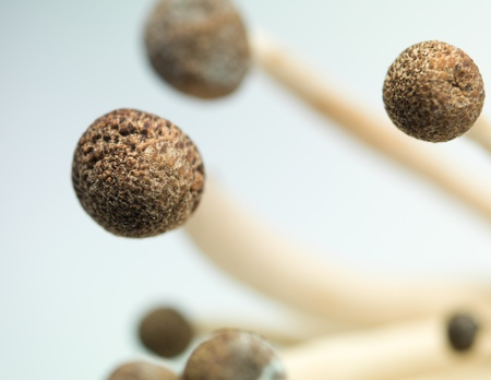 aerial view closeup of enoki mushroooms with brown caps and thin stems delicately bent in the light background Stock Photo - 20700523
