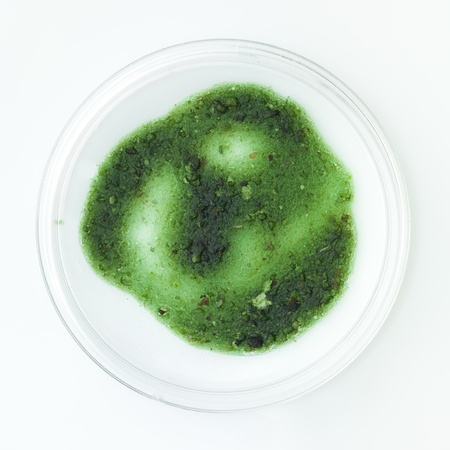 specimen testing: aerial view of green fully developed mold sample in a petri dish on a white surface