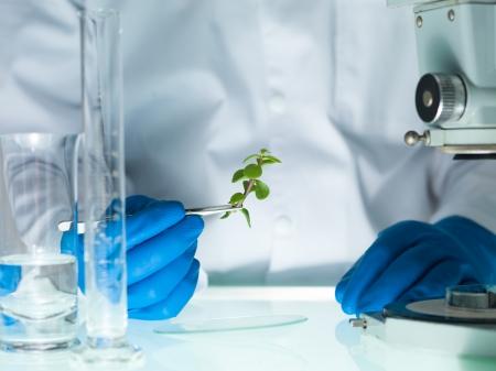 plants species: immagine che mostra le mani di una persona in blu guanto di gomma in possesso di un piccolo impianto di foglia con una pinzetta accanto a un microscopio e vetreria di laboratorio