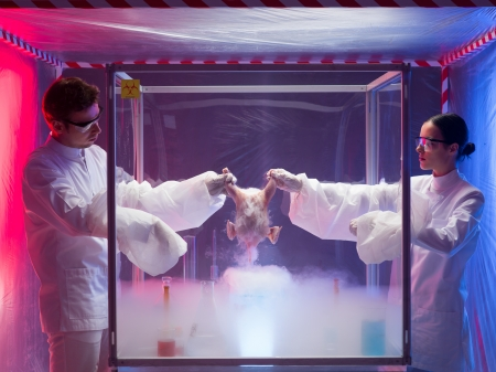 avian: Two scientists standing on either side of an isolation or sterility tent holding onto the carcass of a bird over a white vapour while testing for bird flu virus or other pathogens in a laboratory Stock Photo