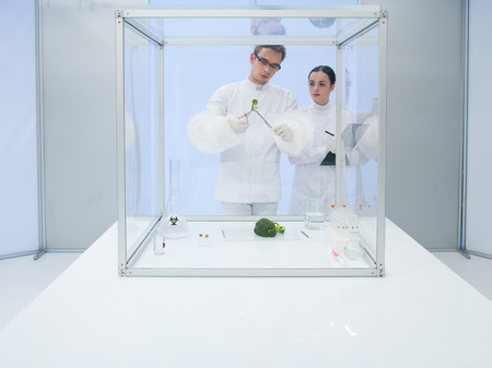 two scientists in a lab, a man and a woman, studying a vegetable in a sterile chamber photo