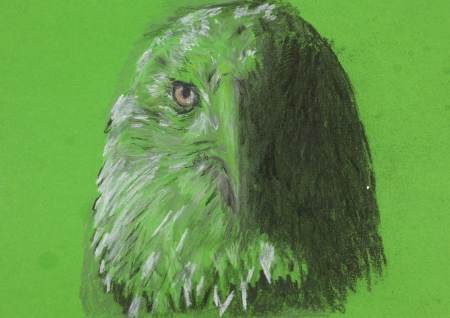 animal heads: hand drawn chalk drawing of eagle head on green background