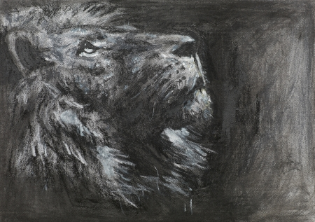 charcoal: hand drawn side view of lion looking up, charcoal and pastel technique