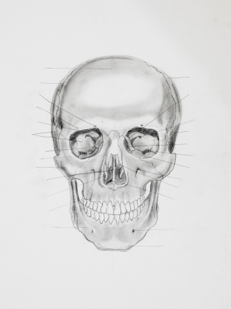 directive: hand drawn pencil illustration, front view of human skull with directive lines pointing at bone parts, on white paper Stock Photo
