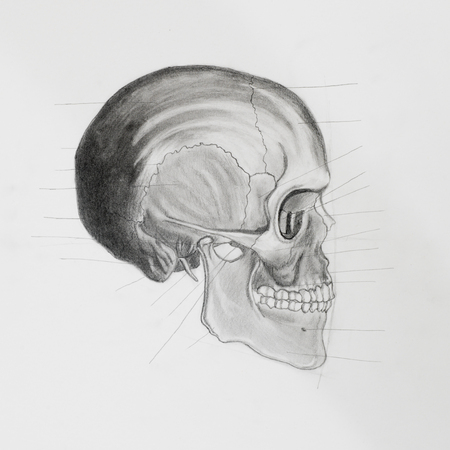 illustratin: hand drawn pencil illustratin, side view of human skull with directive lines pointing at bone parts, on white paper Stock Photo