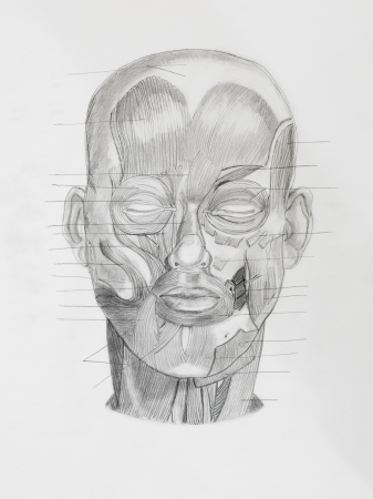directive: hand drawn pencil illustratin, frontview of human head with directive lines pointing at muscle parts, on white paper