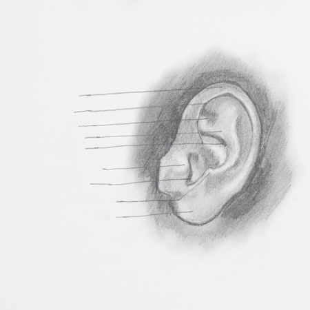 Detail of ear pencil drawing on white paper photo