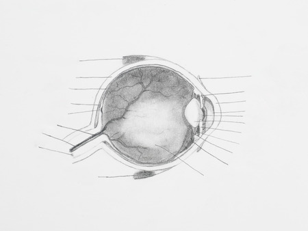 Detail of eye pencil drawing on white paper Stock Photo - 23653509