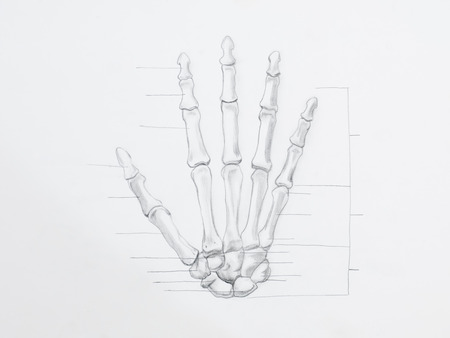 distal: Detail of hand bones pencil drawing on white paper