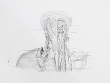 Detail of neck back muscles pencil drawing on white paper Stock Photo - 23653506