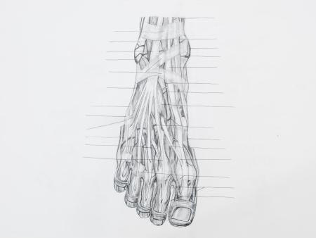 tendones: Detalle de los m�sculos del pie tendones dibujo a l�piz sobre papel blanco
