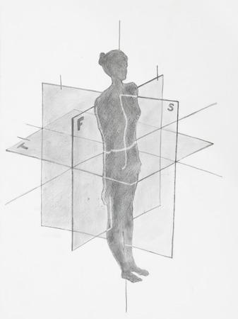 anatomical: Detail of women anatomical planes