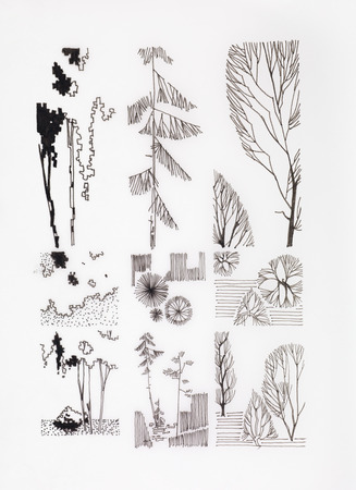 hand made: hand made ink drawing of branches and trees, vintage illustration