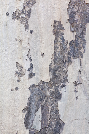 mustiness: Wall texture with fallen plaster and mold