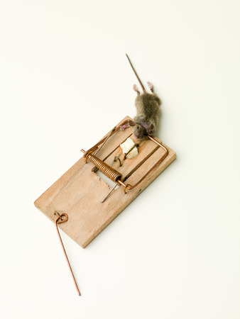 entrapment: small mouse caught in a trap