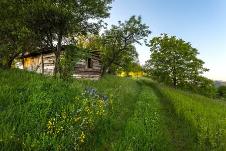yellow flower tree: idyllic landscape with meadows, trees, wild flowers and a wooden hut