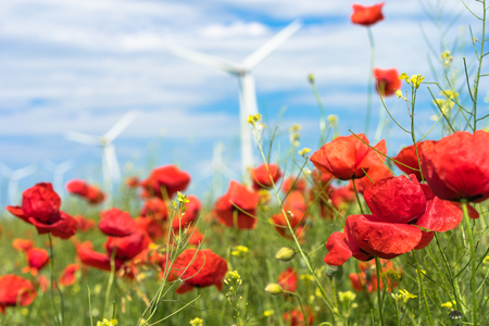 Poppy flowers in the focus and the wind turbine farm in the background