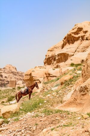 Horse and rock formations, in the city of Petra, Jordan