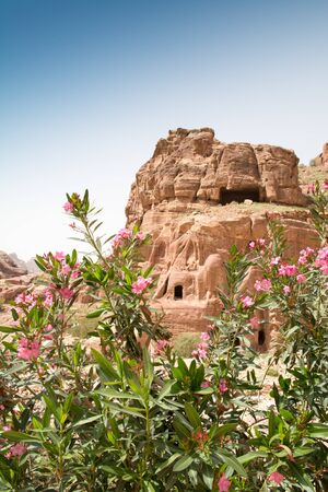Facade of a beautiful building in the archaeological site of Petra, Jordan, with pink oleander flowers in the foreground. 新聞圖片