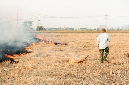 Burned fields photo