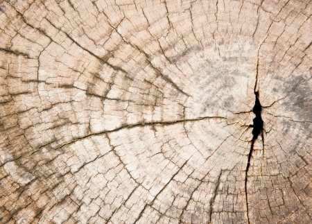 Sawn cracked timber showing annual rings photo