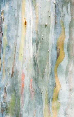 abstract painting: Abstract painting by eucalyptus tree bark