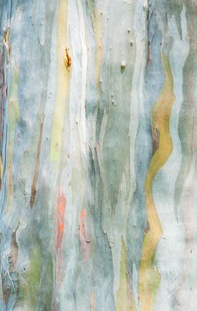 cuadro abstracto: Pintura abstracta de eucaliptos de corteza de �rbol Foto de archivo