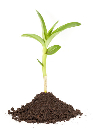 young plant: new sprout and dirt isolated on white