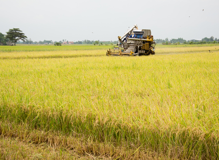 combine harvester: farm worker harvesting rice with tractor in Thailand