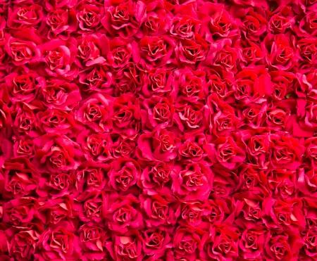 Natuurlijke rode rozen