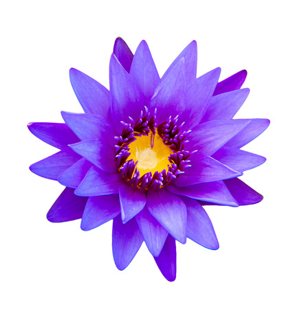 Close up light purple color blooming water lily or lotus flower isolated on white photo