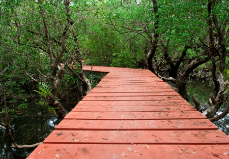 Wood Boardwalks mangrove forest photo