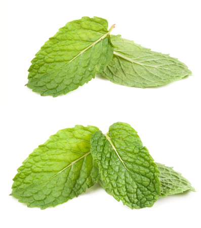 fresh mint leaves isolated on white background. Studio macro photo