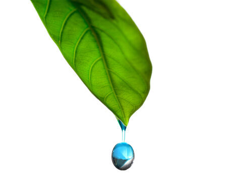 drop of water on a green leaf photo