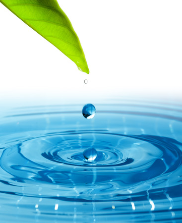 Green leaf with splashing water drops. Stock Photo
