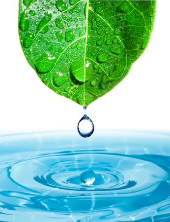 Green leaf with splashing water drops. Reklamní fotografie