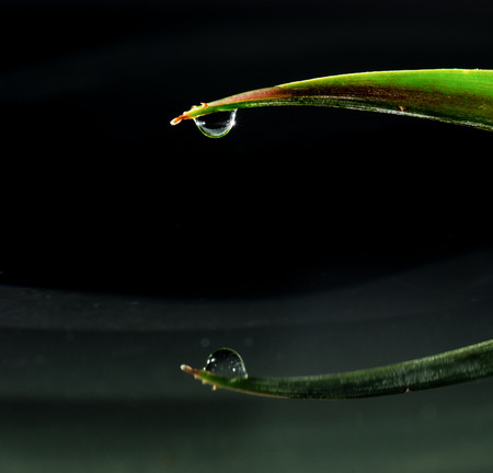 water drops falling down from green leaf photo