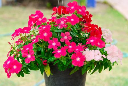 Beautiful flower pot in the garden. photo
