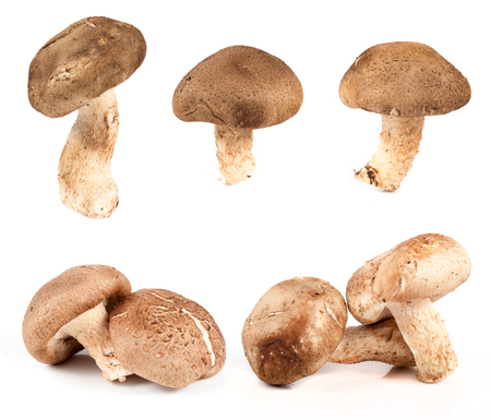 Set of images with mushrooms on white background photo