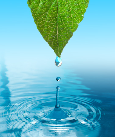 green leaf with water drop ans splash isolated o white Imagens