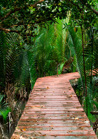 Wood Boardwalks mangrove forest photo