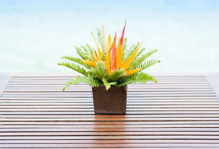 Closeup of Fern Leaf On Wood Plank Background photo