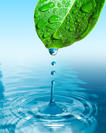 green leaf with water drop ans splash isolated o white photo