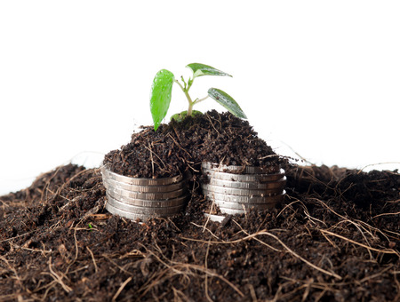 coins in soil with young plant isolated. Money growth photo