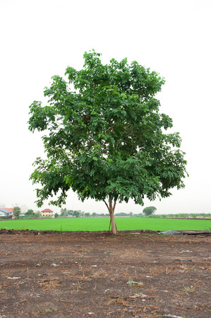 agri: Farm Landscape and Tree Stock Photo