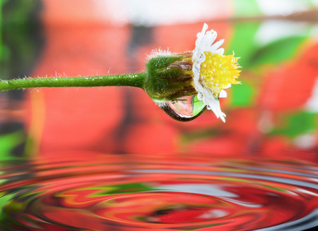 White Flower reflecting in water photo