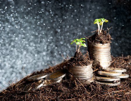 coins and plant - money growth concept. photo