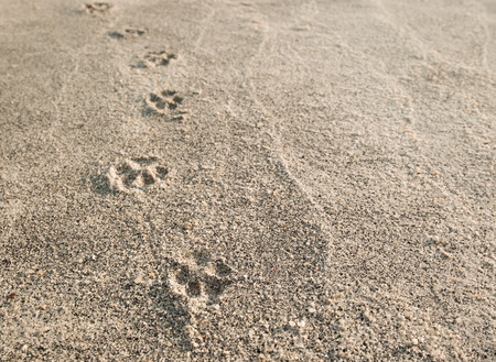 footprints in sand: Dog paw prints in the sand.